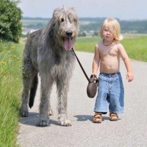 Wolfhound 1
