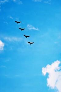 birds-216826_640